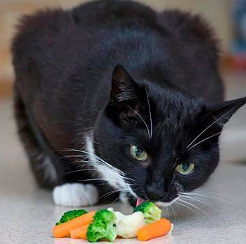 dieta casera para gatos
