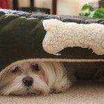 perro con miedo a ruidos